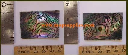 Green abalone blanks select