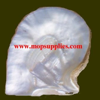 White MOP shell